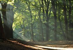 zonnestralen in het bos op landgoed Hoekelum