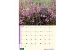kalender 2020 Geldersch Landschap & Kasteelen