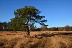 winters landschap Klein Bylaer