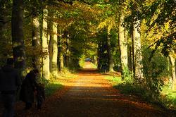 herfstkleuren op landgoed Mariëndaal