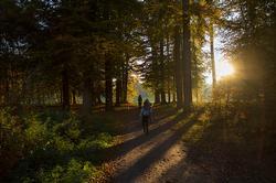 wandelen in het park van landgoed Schaffelaar